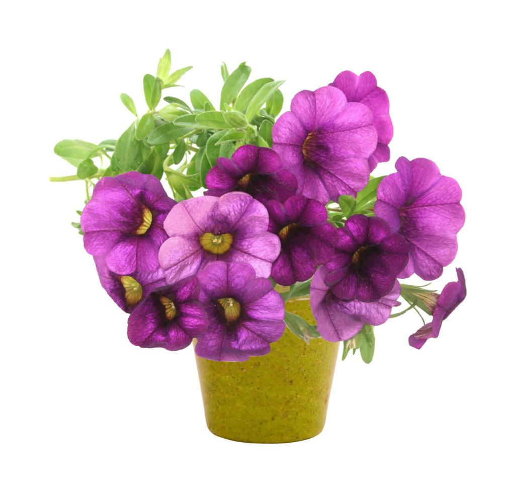 Květináč z biologicky rozložitelného materiálu
